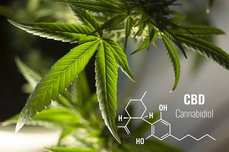 CBD Leaves and equation text